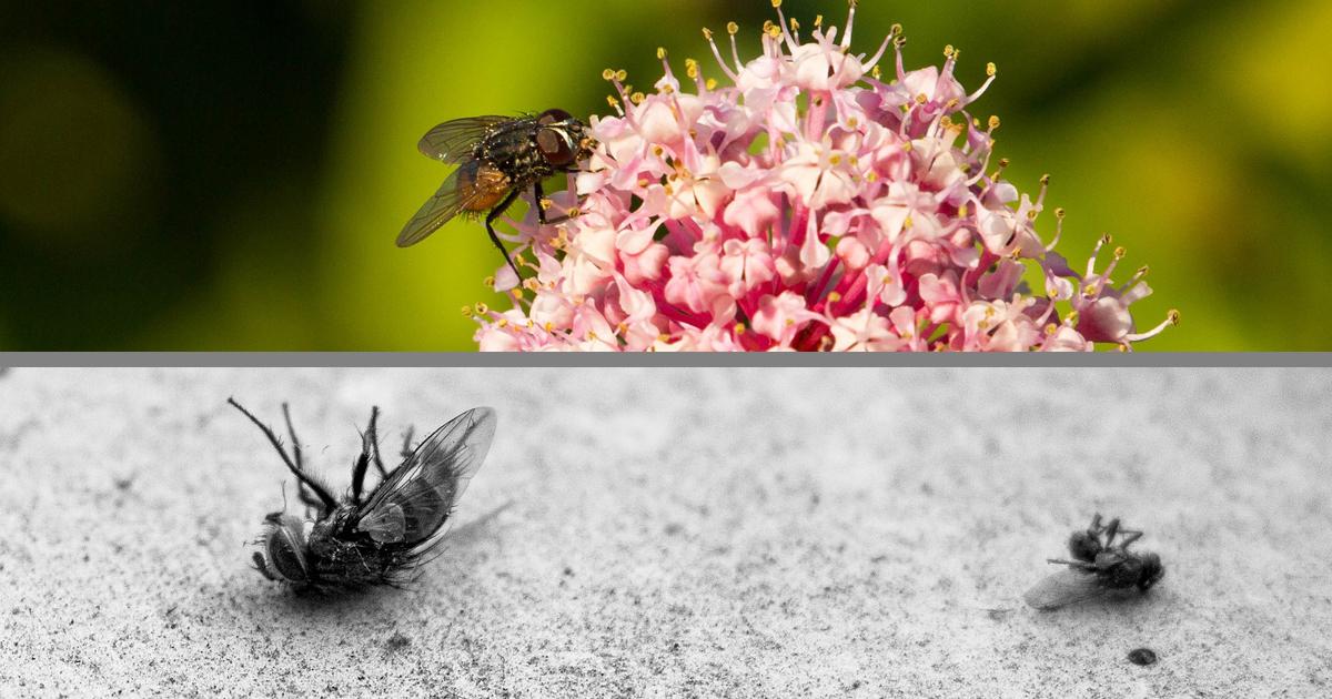 insektensterben warum brauchen wir insekten waschb r magazin. Black Bedroom Furniture Sets. Home Design Ideas
