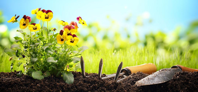 waschb r garten tipps pflanzzeit im herbst. Black Bedroom Furniture Sets. Home Design Ideas