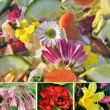 Bio Krauter Pflanzen Online Bestellen Waschbar Versand