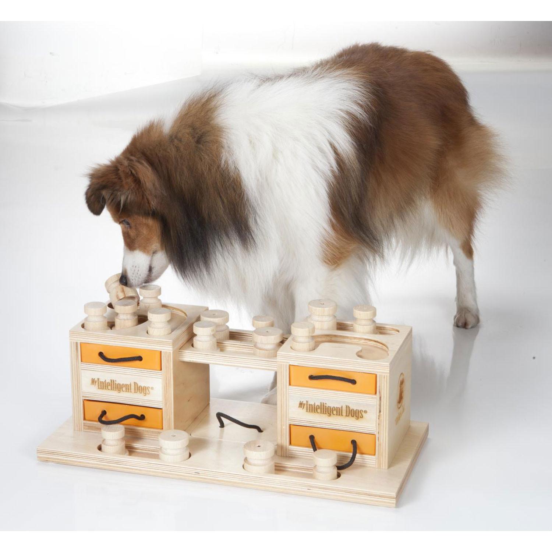 Geschicklichkeitsspiele FГјr Hunde