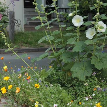 pflanzen berraschungspaket bl tenmeer im schatten waschb r. Black Bedroom Furniture Sets. Home Design Ideas