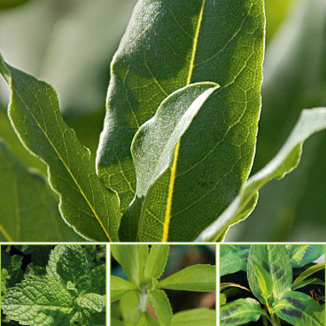 bio kr uter pflanzen online bestellen waschb r versand On bio pflanzen versand